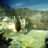 海遊館のペンギン