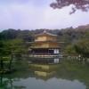 金閣寺と桜